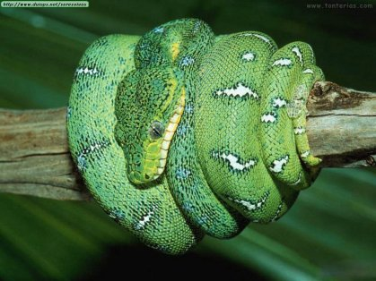 https://despabilar.files.wordpress.com/2011/08/serpiente_verde_1024.jpg?w=300